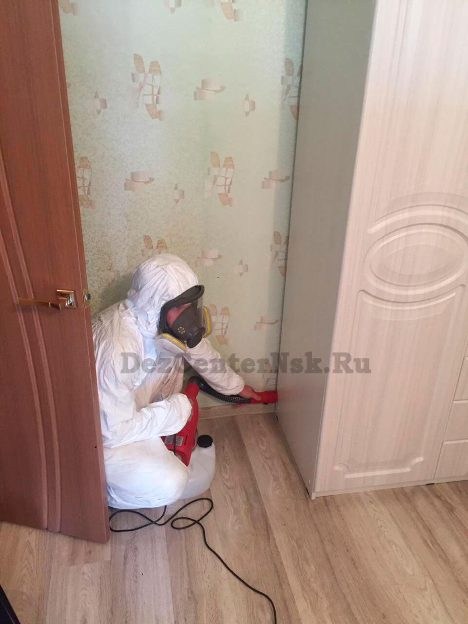 дезинфекция клопов в квартире